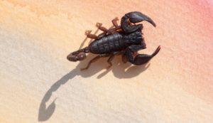 scorpione-dr-michel-mallard-medicinanaturaleolistica